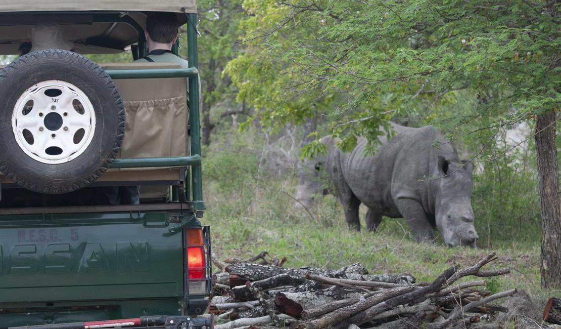 Lush Safaris