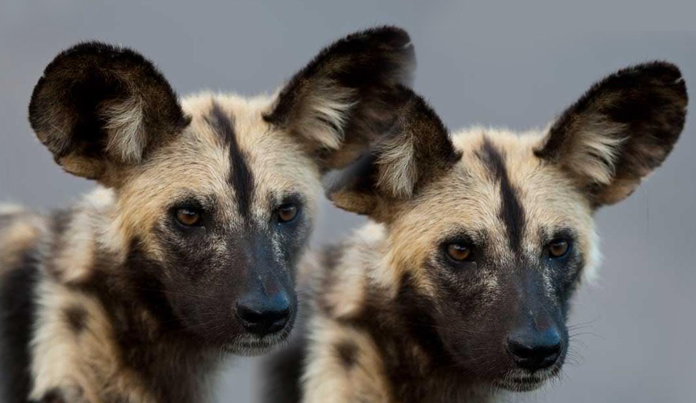 Lush Safaris - Photo Gallery